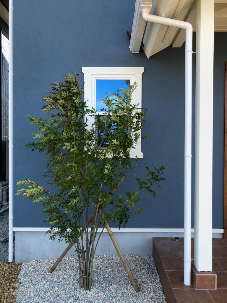 浜松市の注文住宅会社のエコーアートが建てた家の植栽写真
